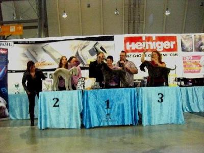 Hundecoiffeusen Meisterschaften Stuttgart 2010